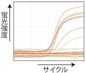 蛍光強度グラフ