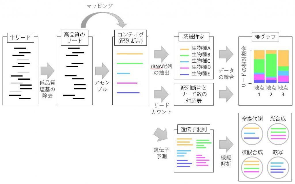 ショットガンメタゲノム解析データ解析